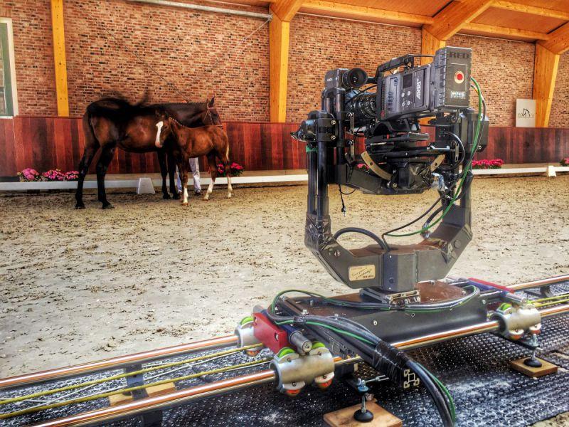 Speedcam @ Hopa Veiling Veulens